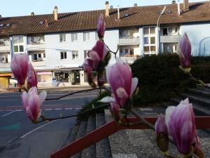 miradlo-Versanddepot im Frühling mit Blick durch die Magnolie