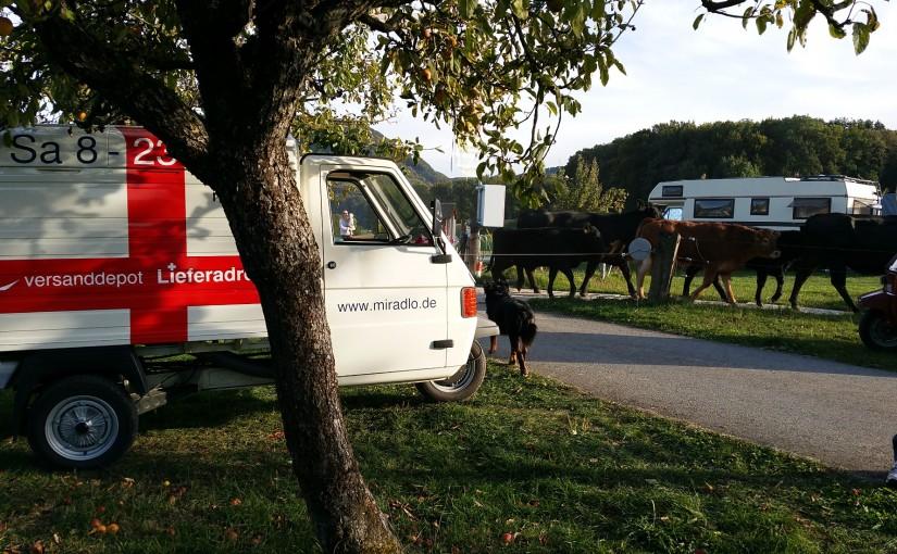 Ape-Treffen in Herznach, ländlich – Apelina-Adventskalender 18