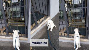 miradlo zu ::: sonntags, montags und an Feier- und Betriebsschließungstagen, haben wir geschlossen. Auch Richie kommt dann nicht rein. miradlo Versanddepot- Päcklebox als Lieferadresse in Konstanz