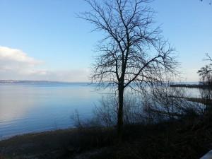 Blick auf den See im Winter - Konstanz Hohenegg