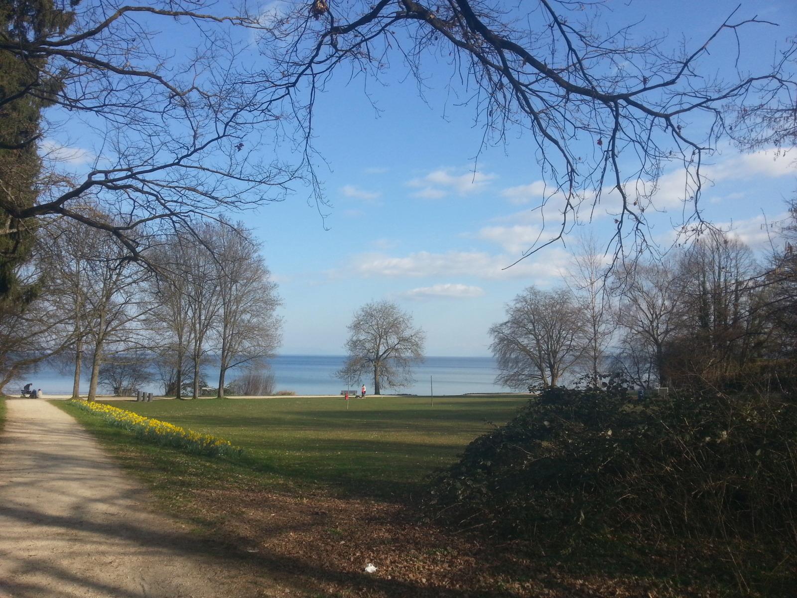 Frühling am See in Konstanz, verbinden mit Paket beim miradlo-versanddepot abholen, See, Narzissen, erste Knospen