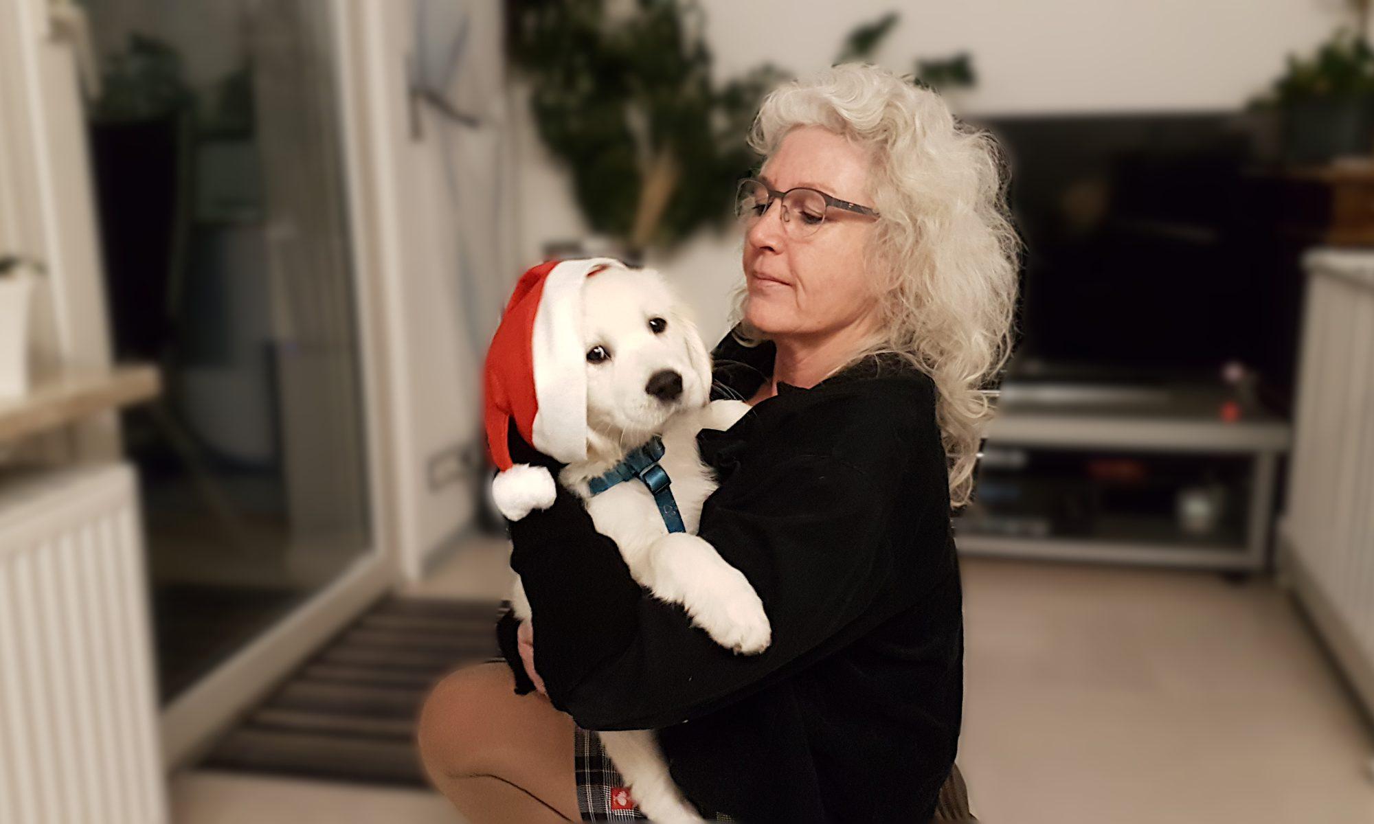 Richie, Golden-Retriever-Welpe im Weihnachtsoutfit